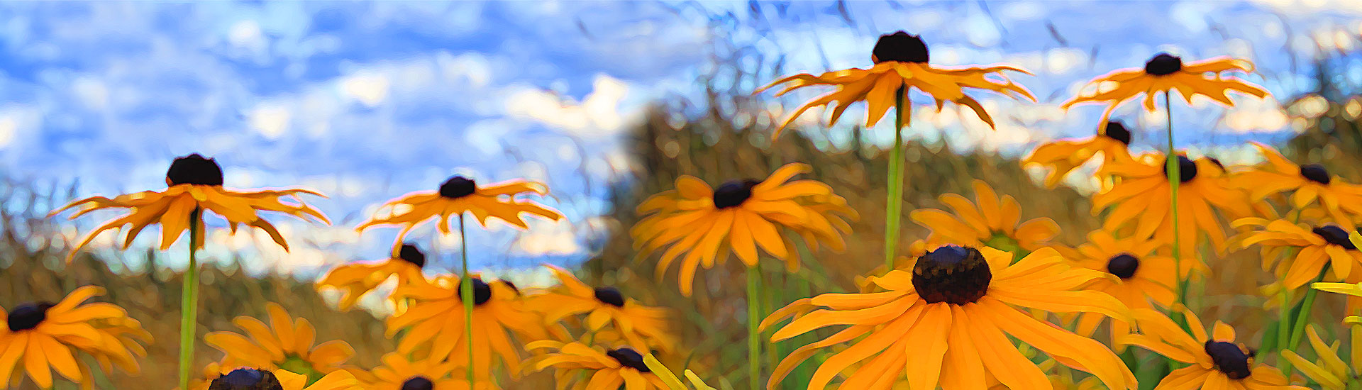 header-black-eyed-susan-consulting-new